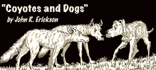 Thumb_banner_for_website__blog_post__coyotes_and_dogs