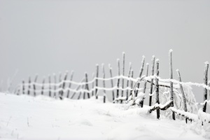 Winter image for website banner  smaller