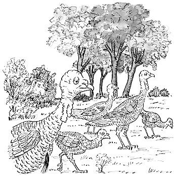 Turkeys and hank for blog
